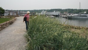 Port Jefferson landscape architecture