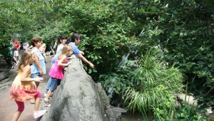 Central Park zoo landscape architecture