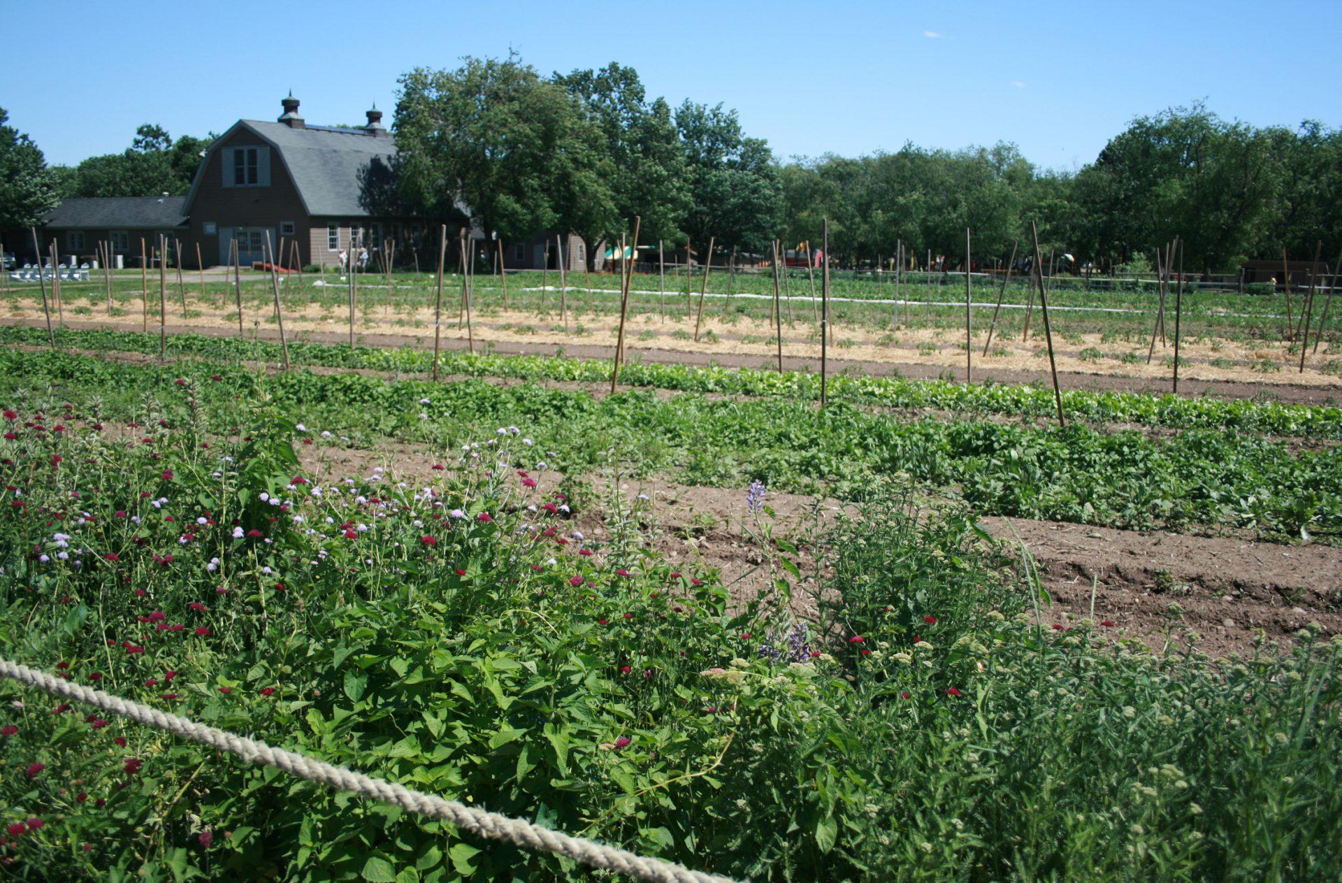 Queens Farm_01