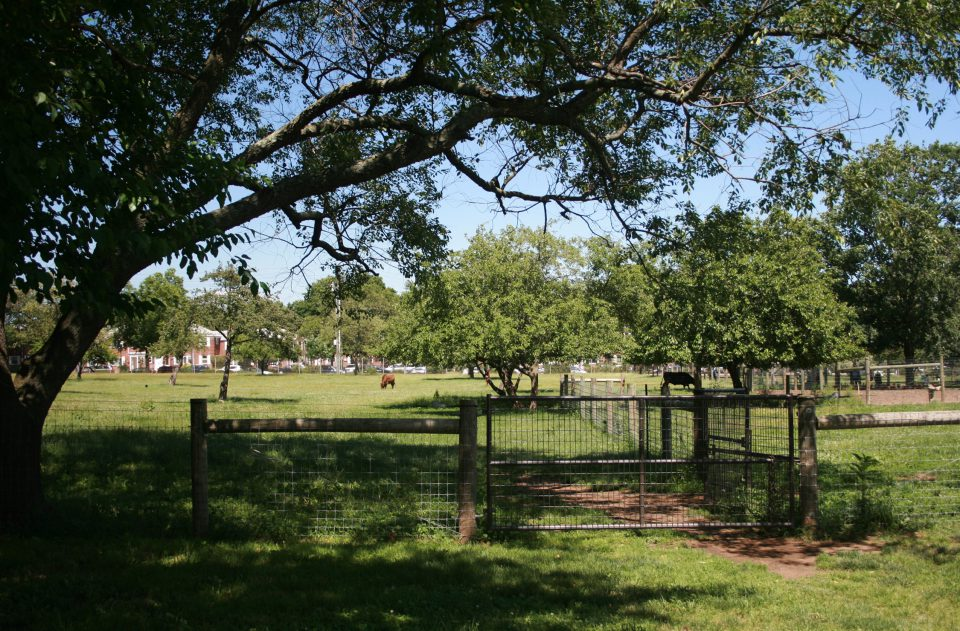 Queens Farm_02