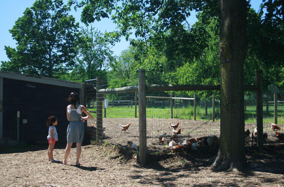 Queens Farm_04