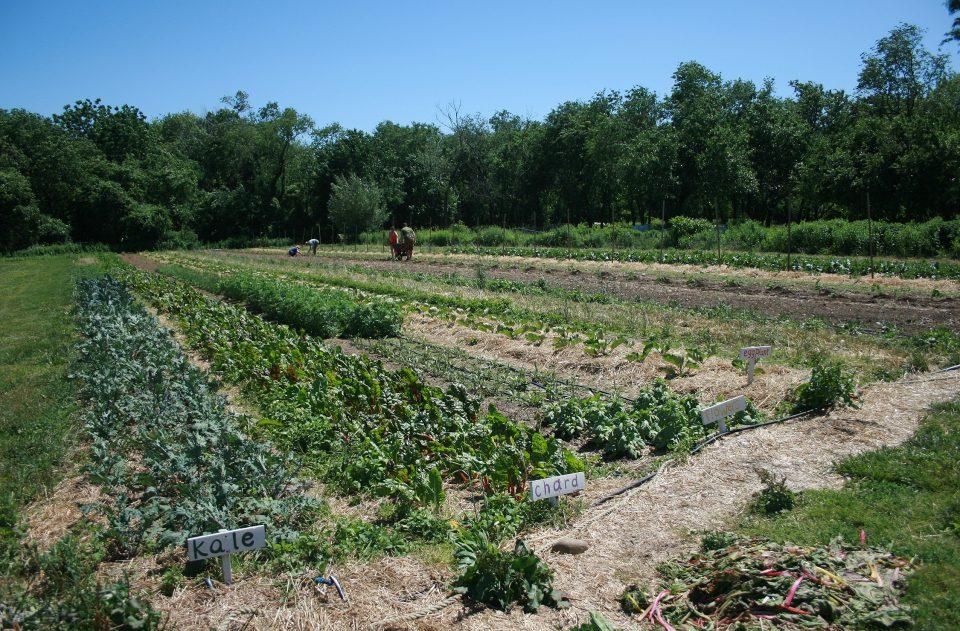 Queens Farm_06