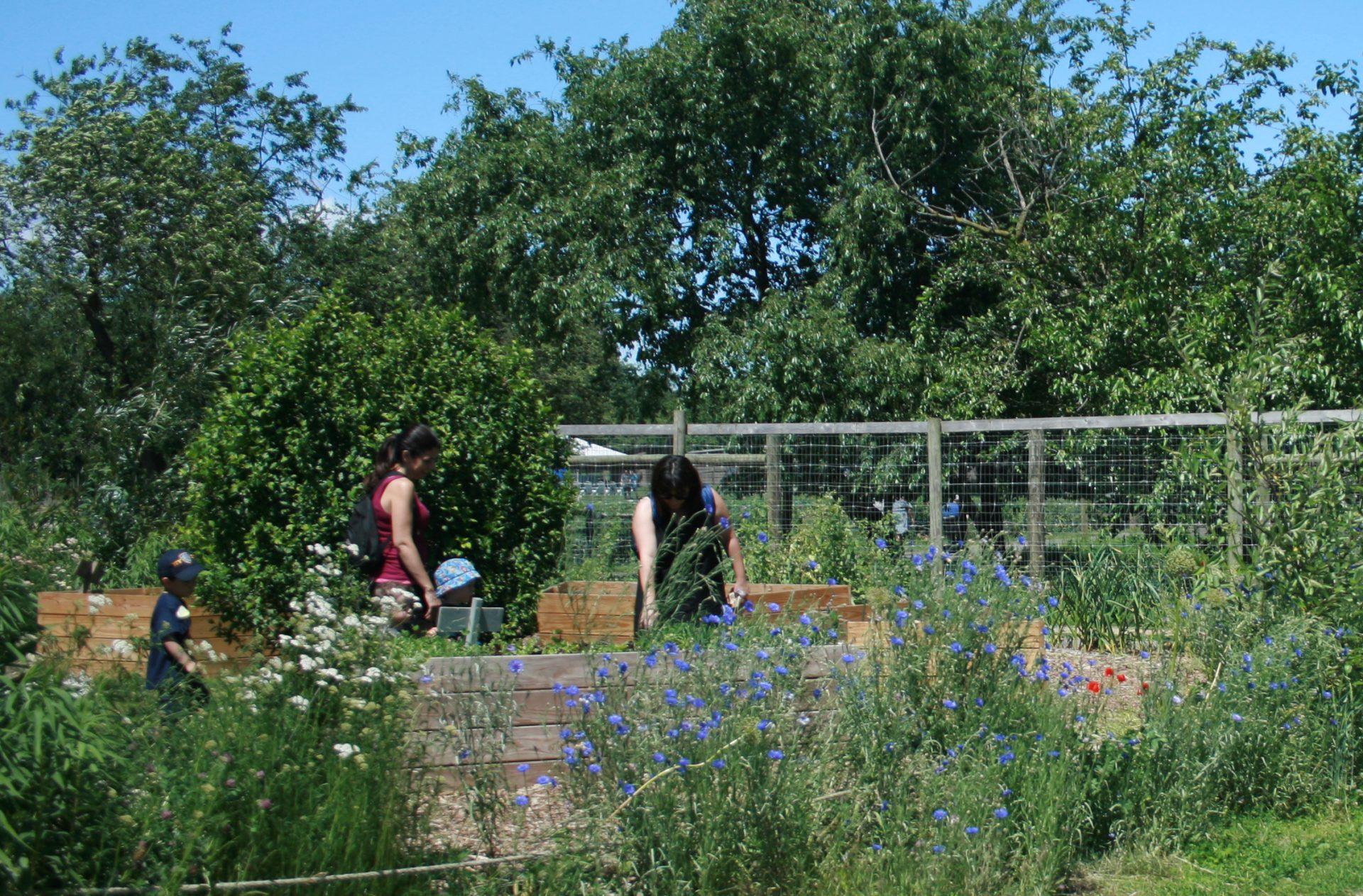 Queens farm landscape architecture
