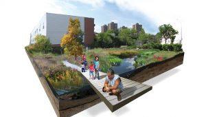 Brook Park landscape architecture wetland